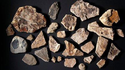 Estos fósiles, que datan del periodo posterior al impacto del asteroide, ofrecen pistas sobre la evolución y la supervivencia de la vida en la Tierra (HHMI TANGLED BANK STUDIOS)