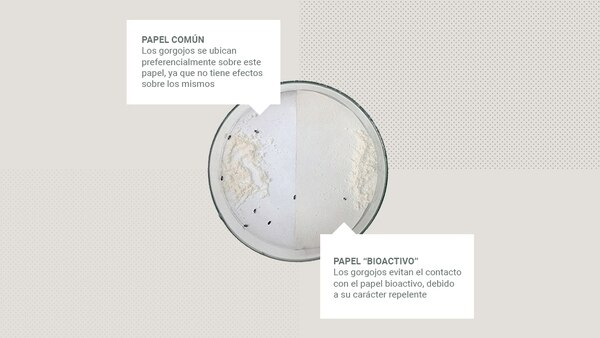 La diferencia entre el papel común y el papel bioactivo en la conservación de alimentos (Conicet)
