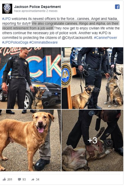 El departamento de Policía de Jackson anunciaba así el retiro de Ringo (Traducción: El Departamento de Policía de Jackson da la bienvenida a sus nuevos oficiales a las fuerzas caninas, Angel y Nadia, que asumieron sus funciones. También congratulamos a los caninos, Ringo y Alpha en su reciente retiro de un trabajo bien hecho. De aquí en adelante, disfrutarán de la vida civil mientras los otros continúan el necesario trabajo policial. Otra forma en la que la policía de Jackson se compromete a proteger a los ciudadanos de la ciudad. (Foto: Facebook Jackson Police Department)