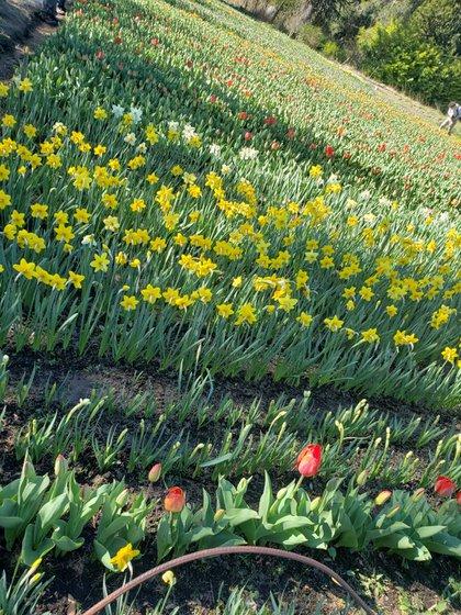 Su abuela Guillermina le inculcó el amor por las plantas. Tenía un maravilloso jardín con casi dos mil tulipanes