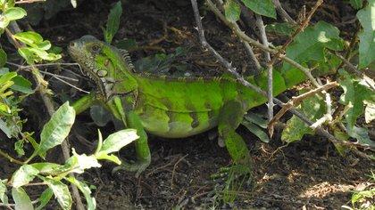 En el área protegida de Cinaruco, Arauca, identificaron 822 especies de flora y fauna