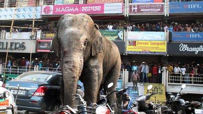 La elefanta destruyó viviendas y vehículos en la localidad de Siliguri AFP 163