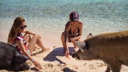 Analía Franchín y Vero Lozano con los cerdos de Bahamas (Foto: @analiafranchin)