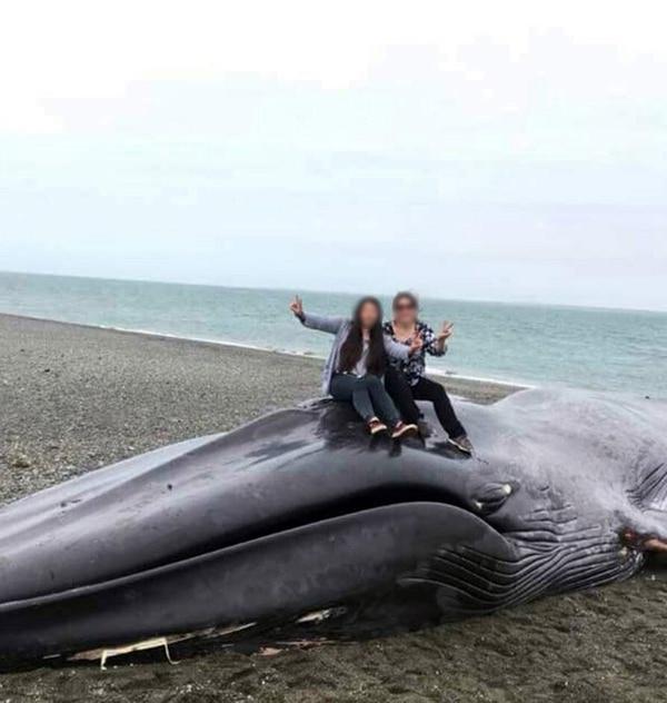 Dos personas se toman fotos sobre el cadáver de la ballena (Sernapesca)