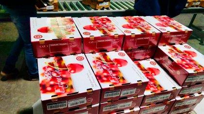 Extraberries exportó a china su variedad Royal Down