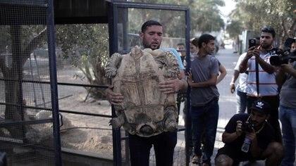 Four Paws ha realizado varias visitas al enclave palestino y ha proporcionado medicinas y alimentos a este y otros zoos (AP)