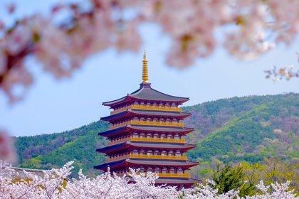 Gyeongju es una ciudad de la costa sureste de Corea del Sur. Fue la capital de la milenaria dinastía Silla y es famosa por sus numerosos vestigios históricos (Shutterstock)
