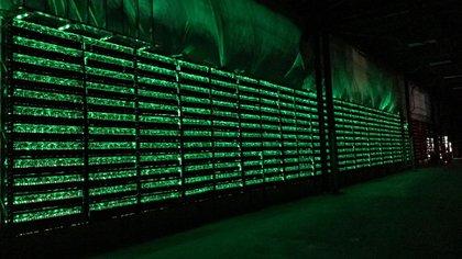 Una de las granjas de servidores de Bitfarms en la que se minan bitcoins de Canadá