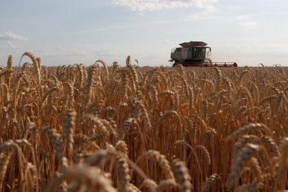 Una cosechadora en un campo de trigo cerca de la aldea de Hrebeni en la región de Kiev, Ucrania, el 17 de julio de 2020 (REUTERS/Valentyn Ogirenko)
