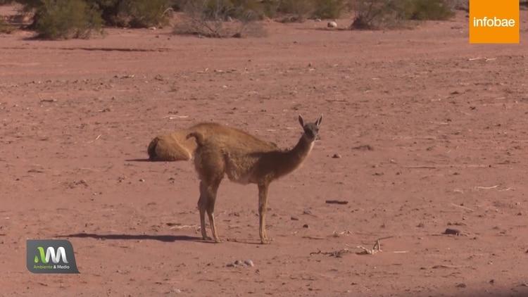 Muchos lugares del planeta hoy son nuevos desiertos