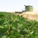 La soja se vio beneficiada por las lluvias del fin de semana pasado