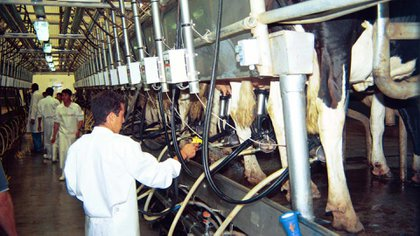 Tamberos pidieron eliminar las retenciones que pesan sobre los lácteos,  para facilitar un proceso de inversión en un sector que no para de perder rentabilidad
