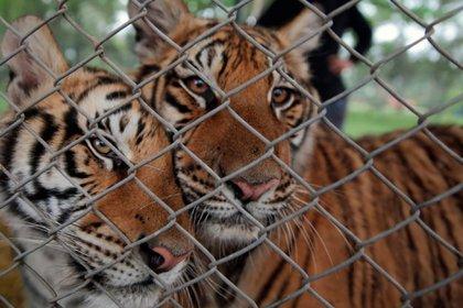 El zoológico también está sospechado de ser nexo con cotos de caza