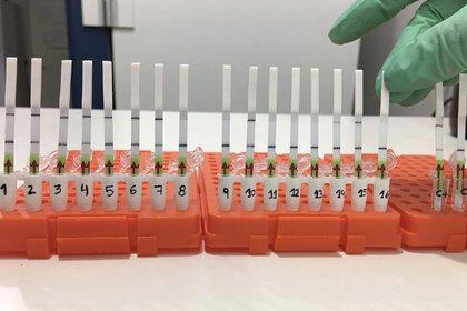 El método para detectar coronavirus en 60 minutos en acción.