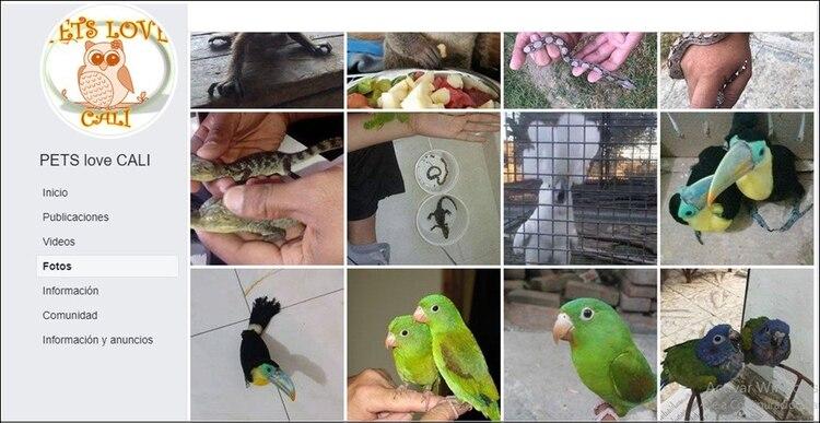 Este es el perfil de Facebook usado por la banda delincuencial para comercializar los animales silvestres.