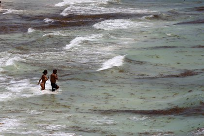 Las costas del estado mexicano de Quintana Roo recibieron los primeros recales masivos de sargazo de este año, con mayor afectación en los balnearios de Playa del Carmen, Cozumel, Tulum, Xcalak y Mahahual. (Foto: EFE)