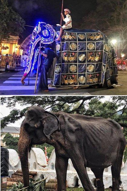 Tikiri, la elefante de 70 años que causó indignación entre los activistas