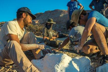 Un grupo de paleontólogos bautizó al Overoraptor chimentoi, el nuevo dinosaurio argentino hallado en la provincia de Río Negro (Julia S. D`Angelo)