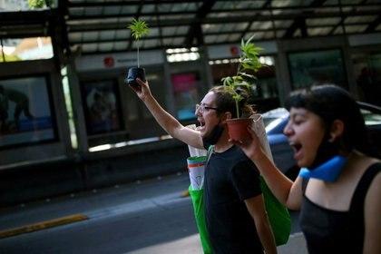 Imagen de archivo. Activistas sostienen plantas de marihuana en una manifestación en torno al proyecto de ley de despenalización del cannabis aprobado por el Senado mexicano como una vía hacia un mercado que beneficiaría a las grandes empresas, frente al edificio del Congreso en Ciudad de México, México. 26 de noviembre de 2020. REUTERS / Edgard Garrido