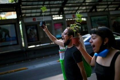 La despenalización de la marihuana ordenada por la SCJN no ha sido concretada de forma legislativa por el Congreso mexicano (Foto: Edgard Garrido/ Reuters)