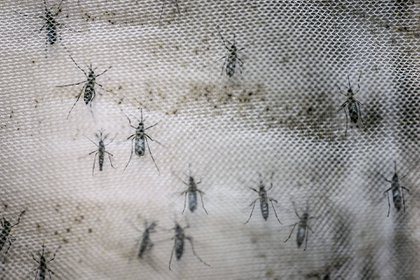Según una de las investigadoras, crecerá de forma drástica el potencial de expansión e intensificación de estas enfermedades, como consecuencia del cambio climático(Foto: Archivo)
