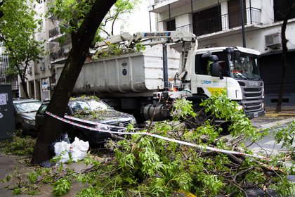 Personal del Gobierno de la Ciudad trabajó desde temprano para remover las ramas y rehabilitar el tránsito vehicular en Palermo