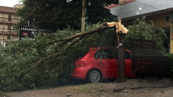Varíos árboles afectaron vehículos y viviendas