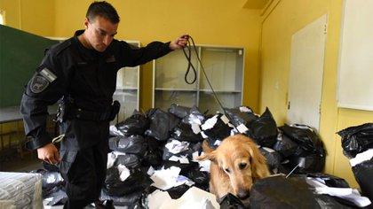Se revisaron la zona de palcos, las tribunas, los vestuarios y las distintas dependencias del club con perros de la división Explosivos y de Narcocriminalidad (Ministerio de Seguridad)