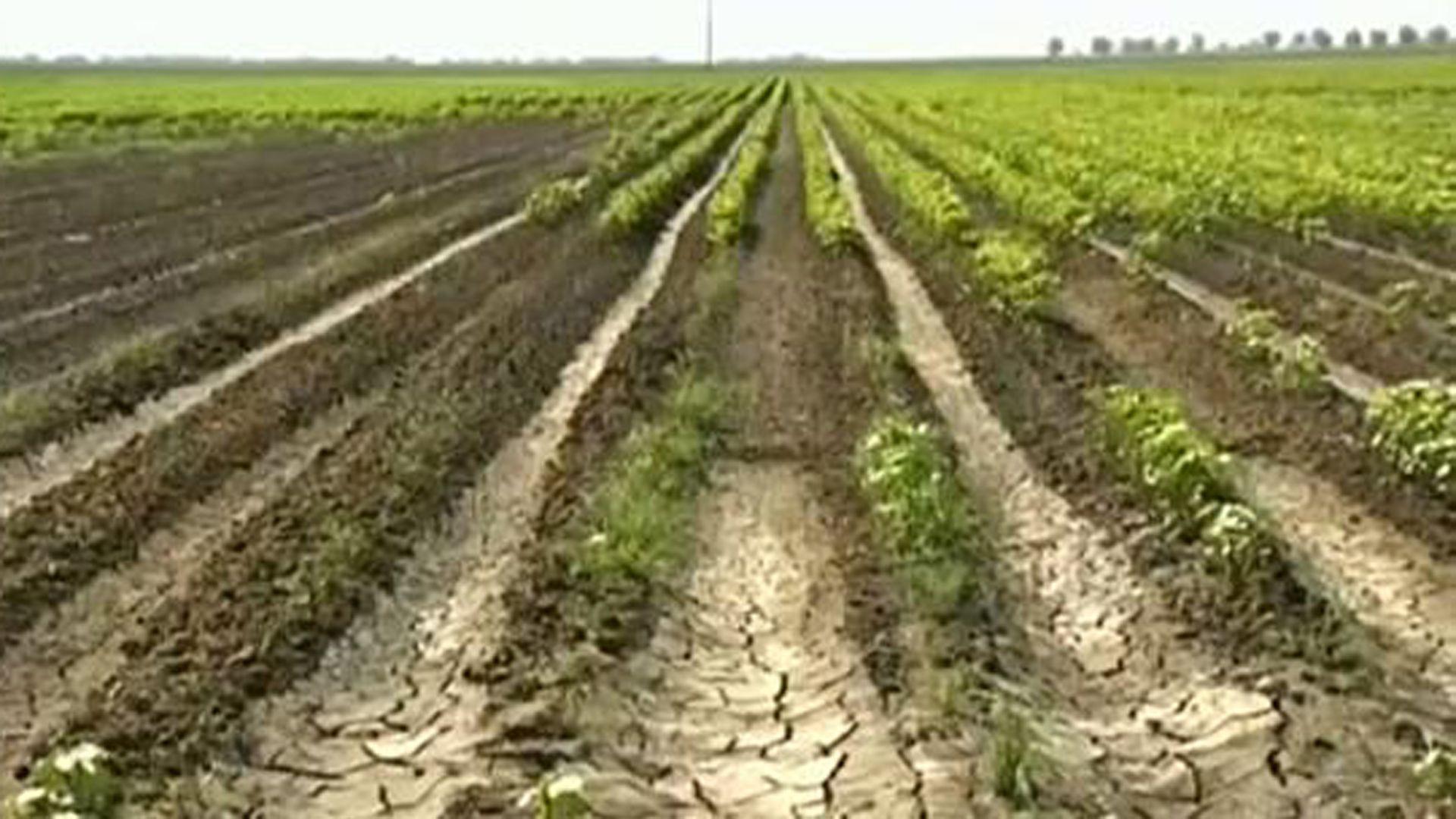 La agricultura también está amenazada por el cambio climático