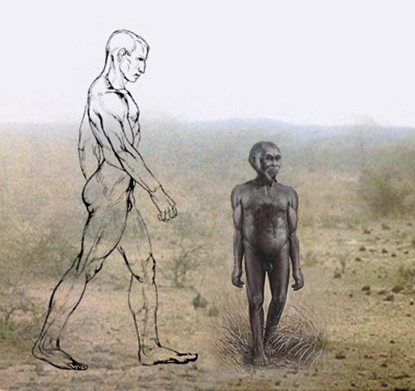 Comparación de tamaño entre el homo sapiens y el homo floresiensis
