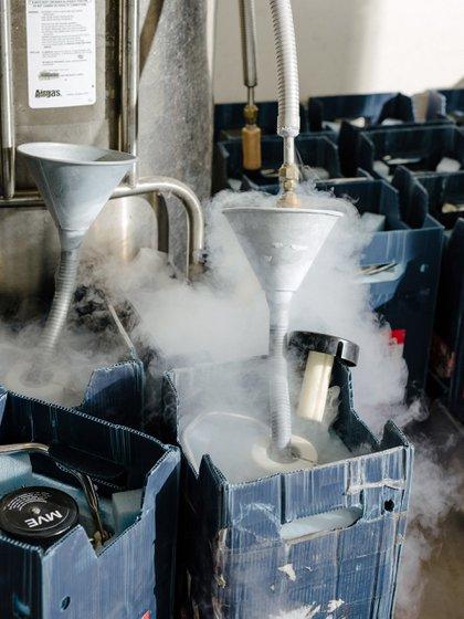 Refrigerante de nitrógeno mantiene los contenedores con esperma en el banco de Seattle, antes de ser enviado a las receptoras.