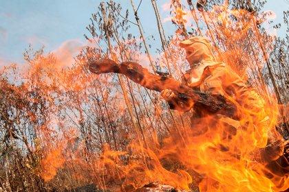 Los incendios en el Amazonas despertaron la alarma de todo el mundo