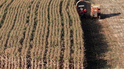 El USDA presentó nuevas proyecciones para la cosecha de maíz de Estados Unidos