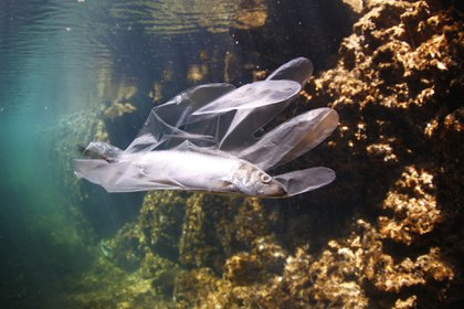 Los peces comen plásticos y, luego, terminan en los humanos tras ingerirlos (Foto_ Pixabay)