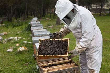 Se estima que, en Estados Unidos, hubo una disminución de un 60% de colmenas entre 1947 y 2008. (Foto: Greenpeace)