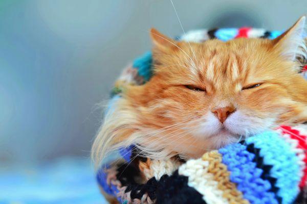 A los gatos les gusta más estar con gente que comer o jugar con objetos