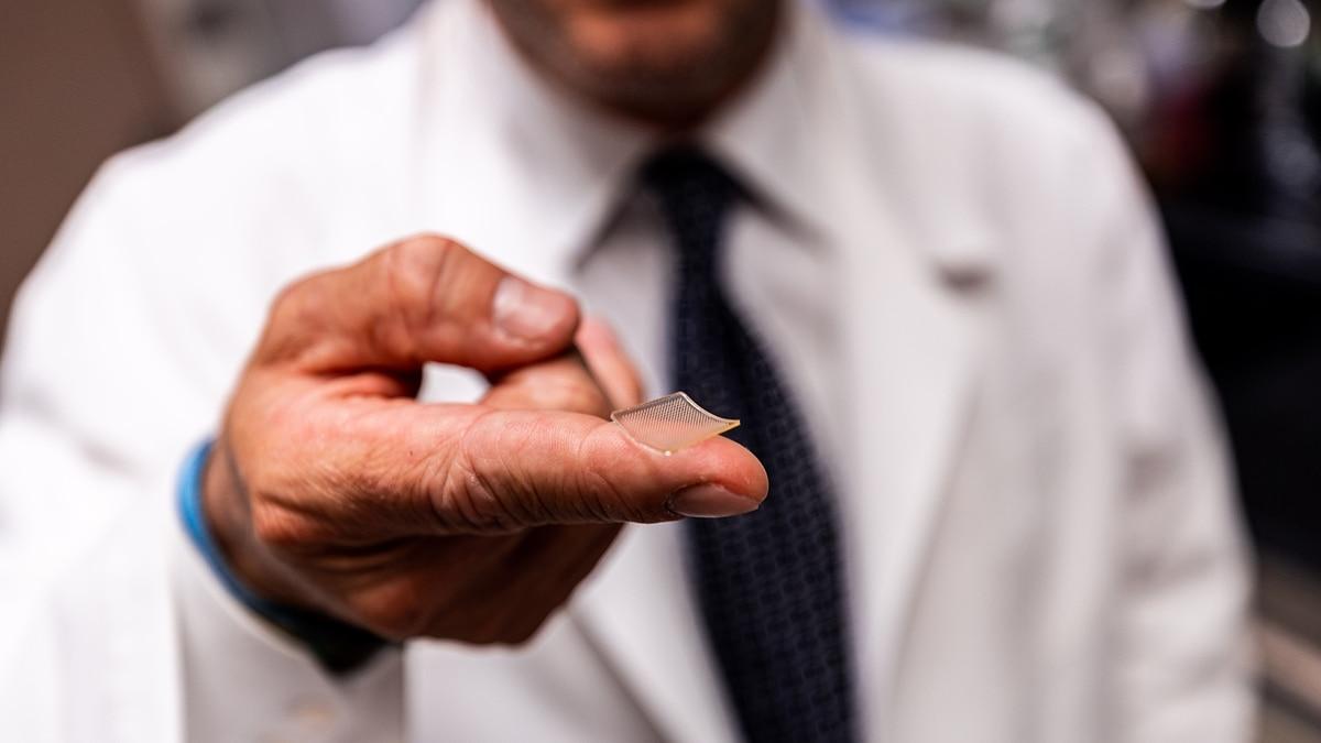 Investigadores probaron con éxito en ratones una nueva vacuna contra el coronavirus - Infobae