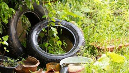 En esta época se debe trabajar en la eliminación de los criaderos de mosquitos que quedaron de la temporada pasada  (Shutterstock)