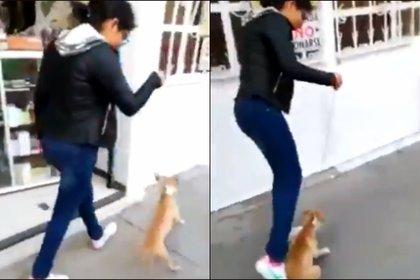 """La adolescente exclamó que no iba a cargar en brazos a la perrita porque era """"un animal"""" no sabía si tenía """"pulgas"""" (Foto: captura de pantalla Twitter @MundoPatitasAC)"""
