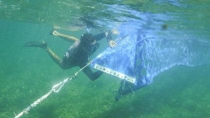 Submarinistas colocan las barreras de contención de sargazo en Puerto Morelos (Foto: Cuartoscuro/Elizabeth Ruiz)