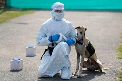 Un soldado que viste equipo de protección personal (EPP) se sienta junto a un perro militar luego de una demostración de cómo el animal detecta el COVID-19, en un hospital veterinario del Ejército en Nueva Delhi, India. 9 de febrero, 2021. REUTERS/Adnan Abidi