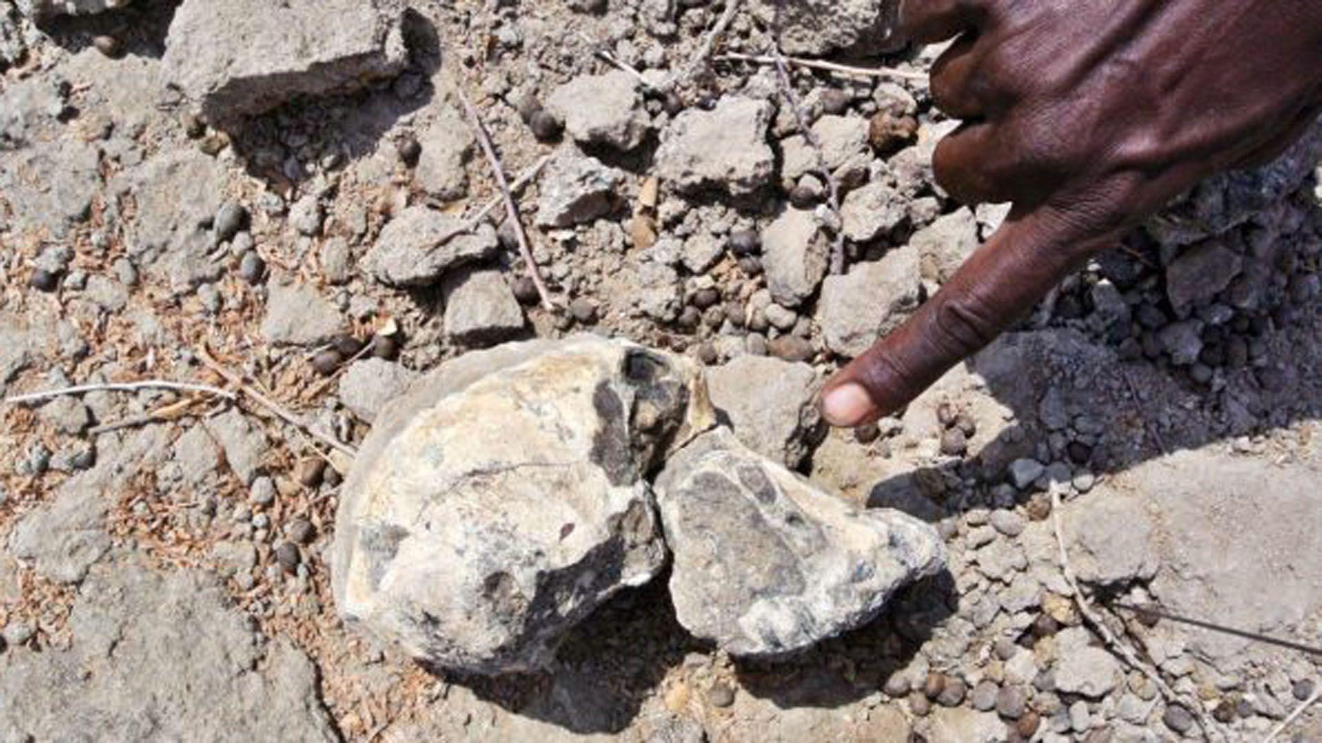 Tamaño del cráneo en comparación con un dedo humano (EFE)
