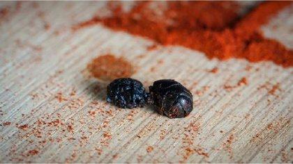 Hormigas culonas con sabores. Foto: Instagram Snacks Insectos.