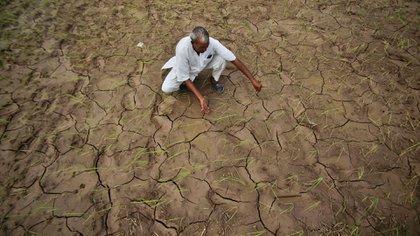 Según la OMS, en la India por año se registran 130 mil suicidios, el doble que hace treinta años