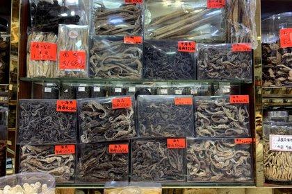 La medicina tradicional (MTC) ve a los caballitos de mar como un medicamento que puede ayudar a fortalecer el riñón y equilibrar el Yin-Yang (Foto: HK01/ Mongabay)
