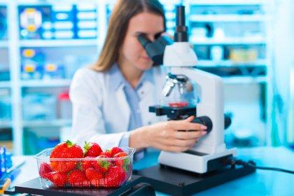 La dieta basada en los resultados obtenidos puede ser útil para la actividad física (iStock)
