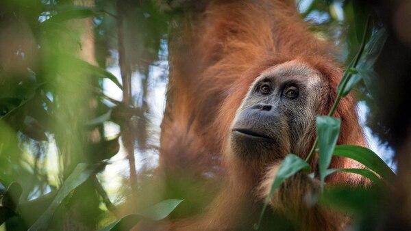 La nueva especie animal sorprendió al mundo (EFE)