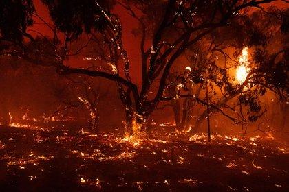 Incendios en Australia (The New York Times)