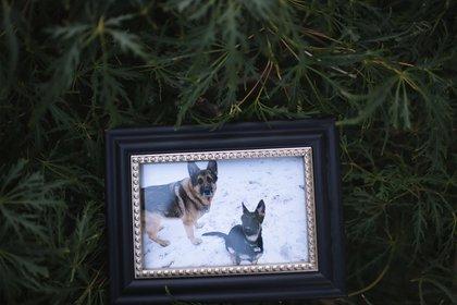 Muere Buddy, primer perro diagnosticado con COVID-19 en EE. UU