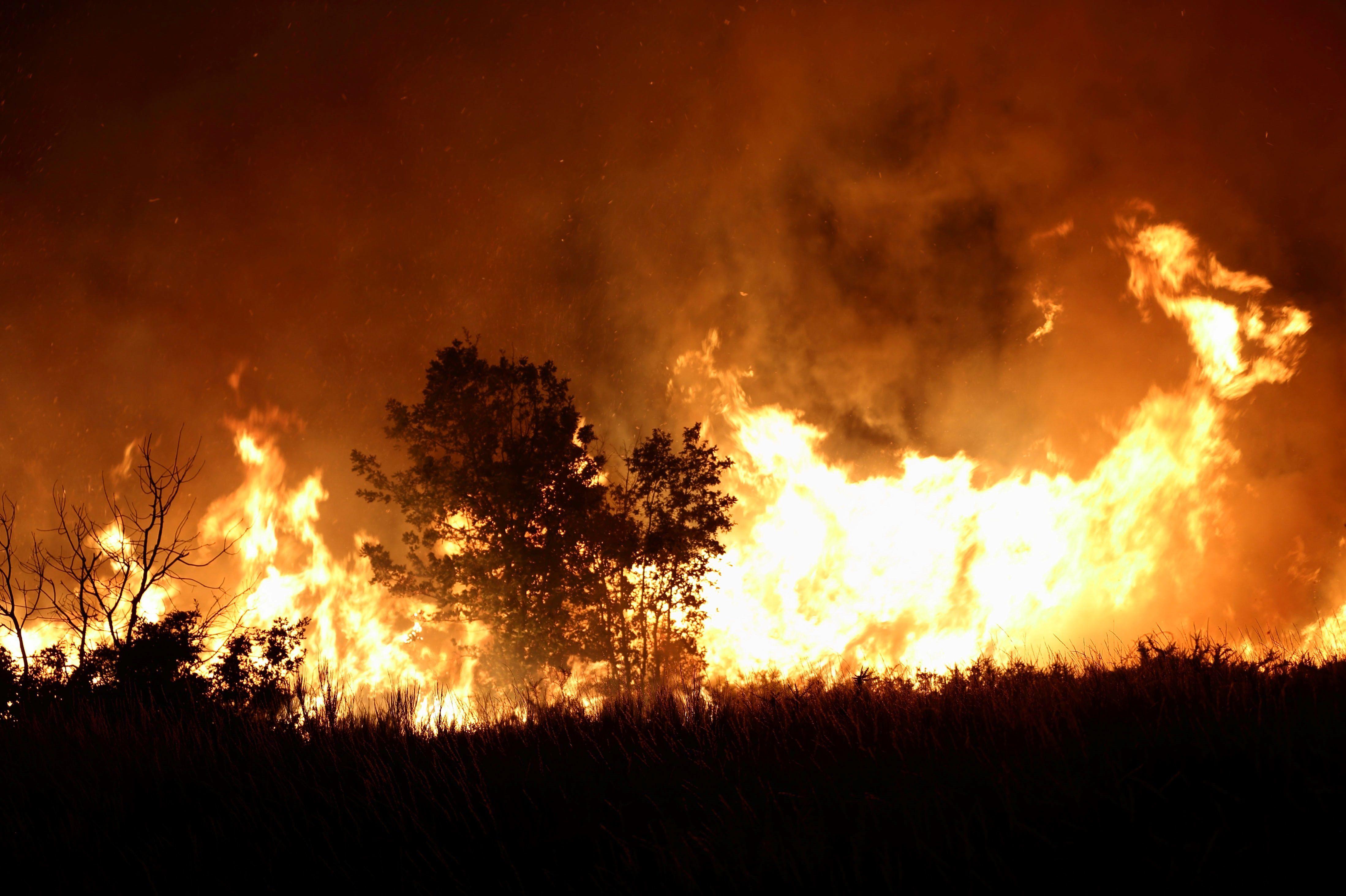Hay evidencia científica que demuestra que las quemas prescriptas permiten cuidar mejor los bosques/  EFE/Sxenich/Archivo